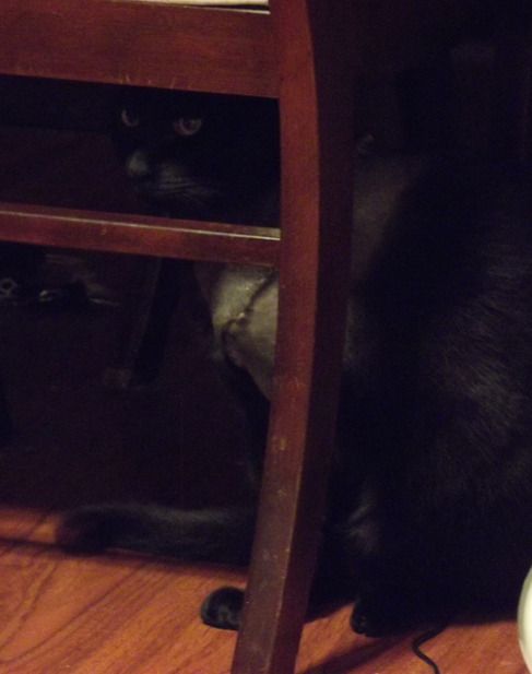 Fang Under Dining Table