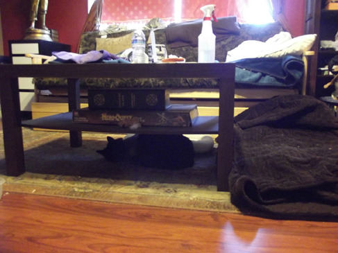 Fang's under the coffee table sleeping arrangements
