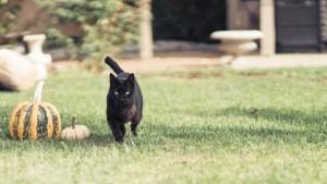 Fang running through the yard