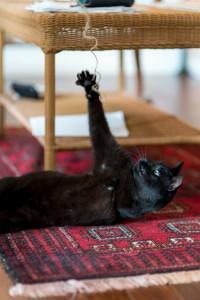 Fang reaching for string
